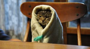Towel kitty!!